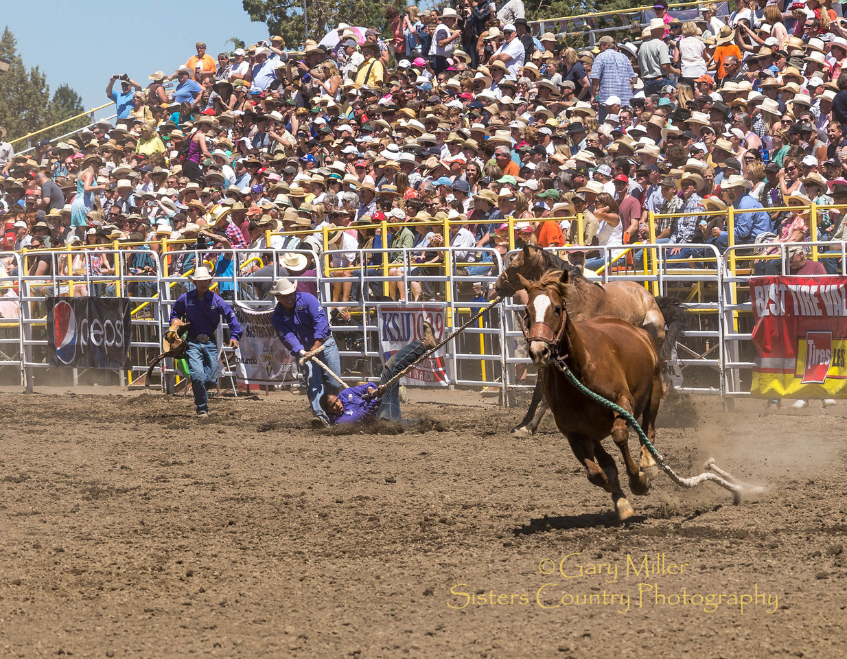 Wild Horse Racing at Saturday afternoon's performance of the 2013 Sisters Rodeo - Sisters, Oregon - Copyright © 2013 Gary N. Miller, Sisters Country Photography