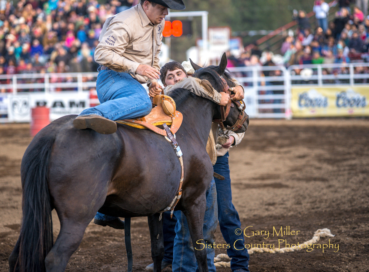 Team Bronc Riding on Friday night at the 2014 Sisters Rodeo - Sisters, Oregon © 2014 Gary N. Miller, Sisters Country Photography