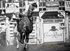 Richmond Champion rides Bareback
