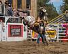Brady Nicholes rides an 82 on Saddle Bronc