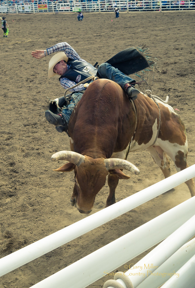 Bullriding competition is a tough sport at the Saturday Night Performance of the 2016 Sisters Rodeo © Gary N. Miller, Sisters Country Photography