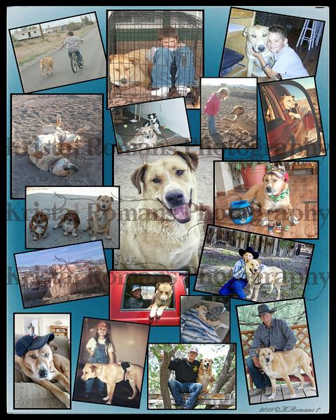 In Memory of Trucker - A Boy's Best Friend