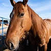 """Instructor @mattcohenphoto feedback on this image: """"I mean, yea, its a picture of a horse head. It's fine. If you like horse head pictures."""" Made me laugh. Shot at rodeo photography workshop at Flying U Rodeo's Free Rough Stock School, Marysville, CA"""