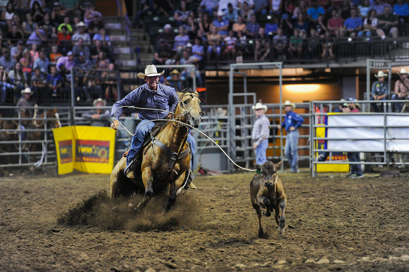 Clete Scheere ropes a calf in the Tie Down Roping Competition at the Larimer County Fair Rodeo in Loveland on Aug. 8, 2016.<br /> <br /> Photo by Michael Ortiz/ Loveland Reporter-Herald