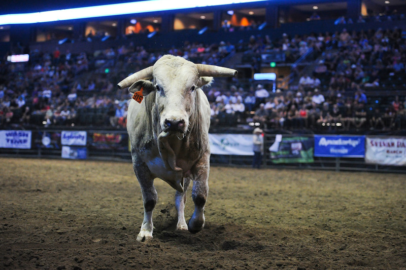 Blow N Go refuses to return to the pen and bucks around the arena at the Larimer County Fair Rodeo in Loveland on Aug. 8, 2016.<br /> <br /> Photo by Michael Ortiz/ Loveland Reporter-Herald