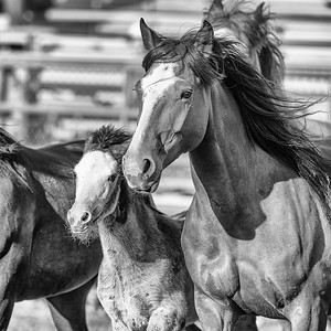 DSC_1402 2013-06-14 Logan Rodeo-Edit