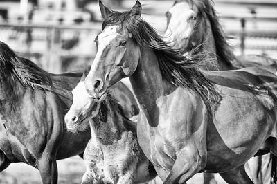 DSC_1403 2013-06-14 Logan Rodeo-Edit