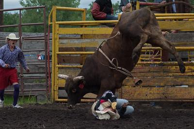 bulls-0501