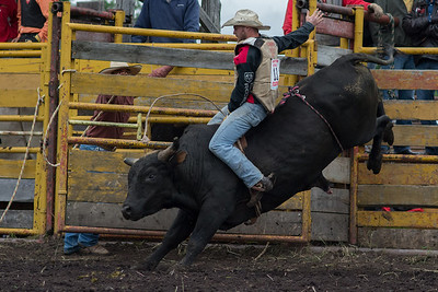 bulls-0577