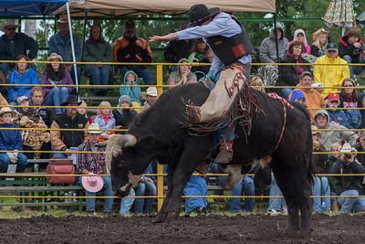 bulls-0477