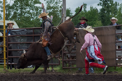 bulls-0490