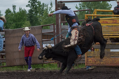 bulls-0471