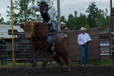 bulls-0453