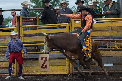 bulls-0503