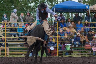 bulls-0478