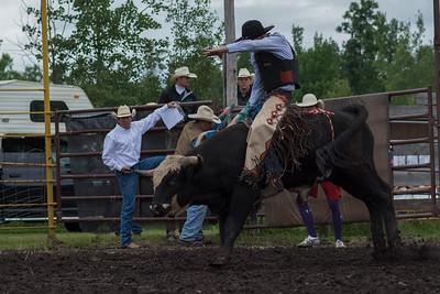 bulls-0472