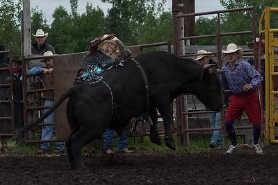 bulls-0463