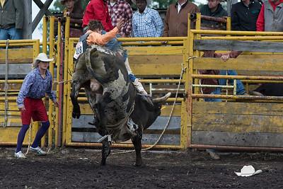 bulls-0511