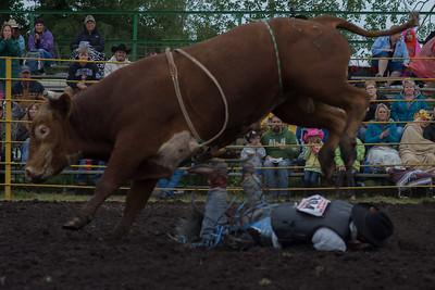 bulls-0459