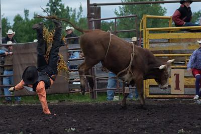 bulls-0506