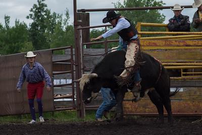 bulls-0470