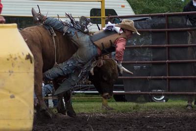 bulls-0482