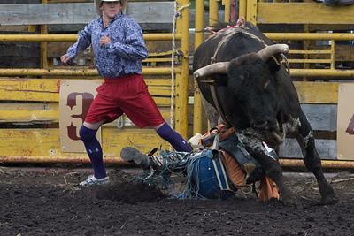 bulls-0512