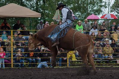 bulls-0456