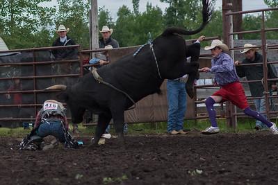 bulls-0465