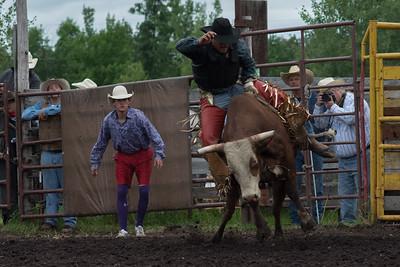 bulls-0496