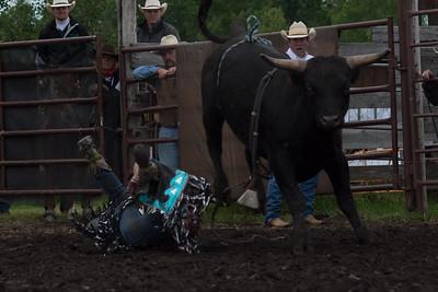 bulls-0464