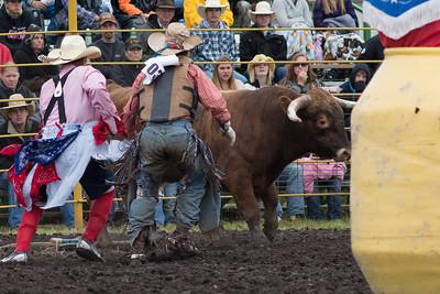 bulls-0486