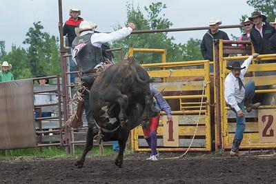bulls-1249