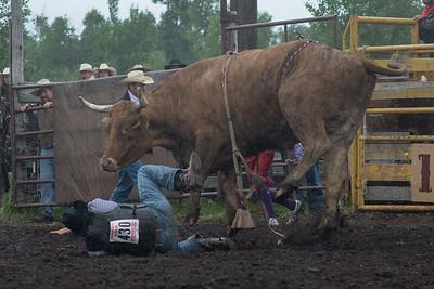 bulls-1205
