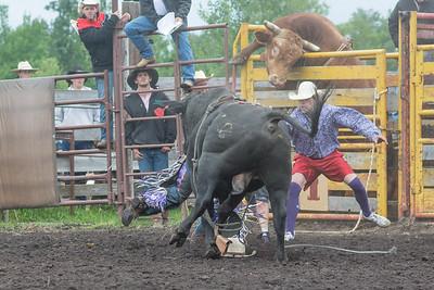 bulls-1246
