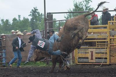 bulls-1204