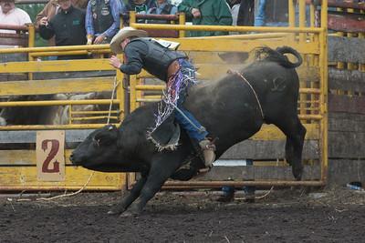 bulls-1240