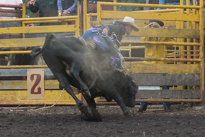 bulls-1242