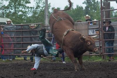 bulls-1219