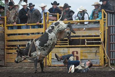 bulls-1235