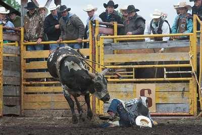 bulls-1236