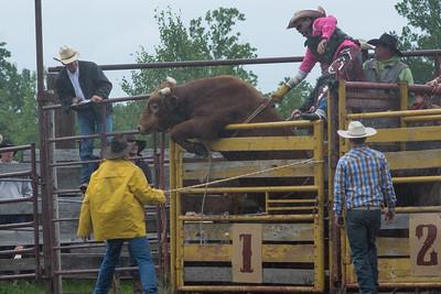 bulls-1225