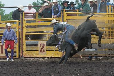 bulls-1241