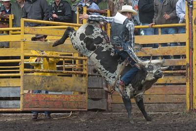 bulls-1231