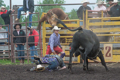 bulls-1245