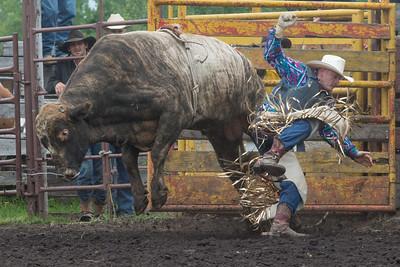 bulls-1229