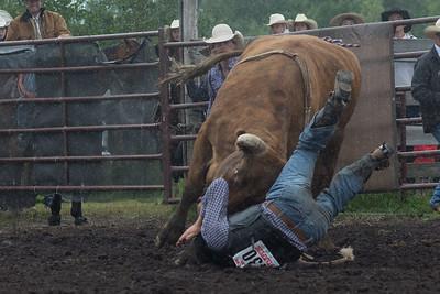 bulls-1206