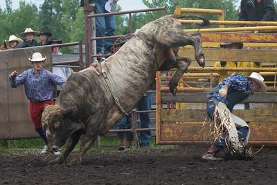 bulls-1230