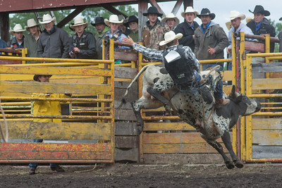 bulls-1233