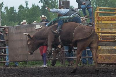bulls-1216